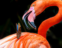 Flamingo and butterfly