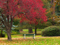Bench in the fall Beacon Hill Park